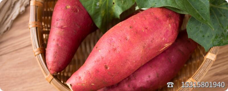 长芽的红薯还能吃吗