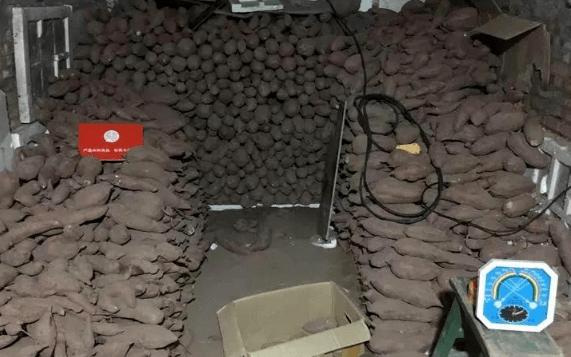 红薯怎样保存长期不坏还不会发芽