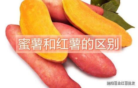蜜薯和红薯的区别是什么有哪些
