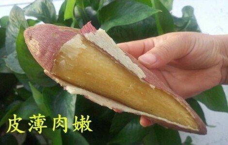 秦薯5号红薯品种及口感介绍