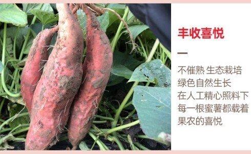 一亩红薯的产量,成本和利润是多少