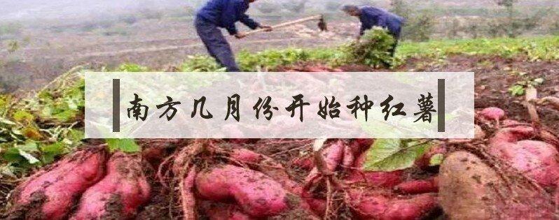 南方种植红薯时间是几月份