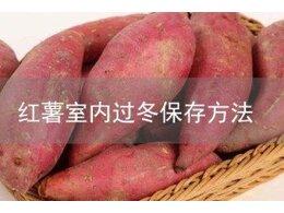 红薯室内过冬最佳保存方法