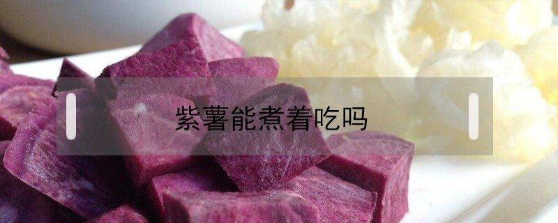 紫薯怎么吃能煮着吃吗?