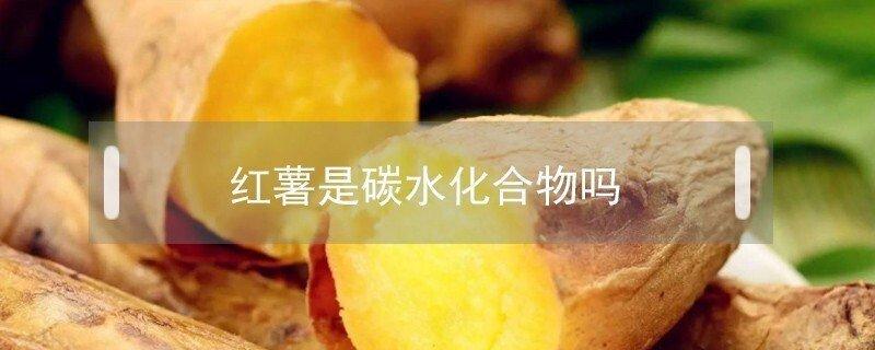 红薯是碳水化合物吗能不能帮助减肥