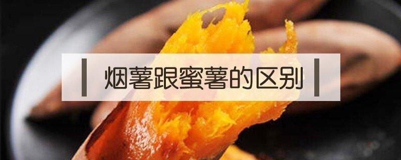 烟薯和红蜜薯的区别是什么