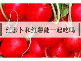 胡萝卜和红薯可不可以一起吃吗