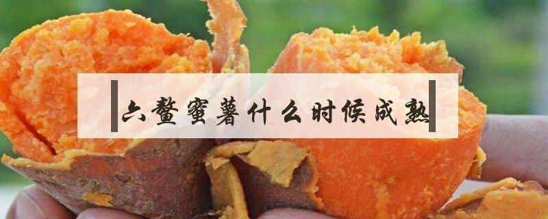 六鳌蜜薯什么时候成熟
