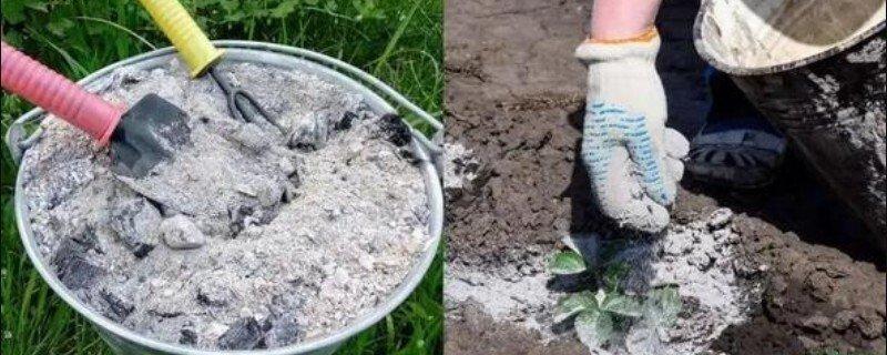 种植红薯用草木灰的方式