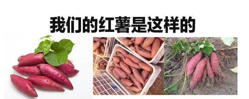 番薯和红薯的区别是什么