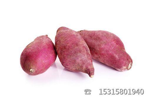 紫薯批发基地
